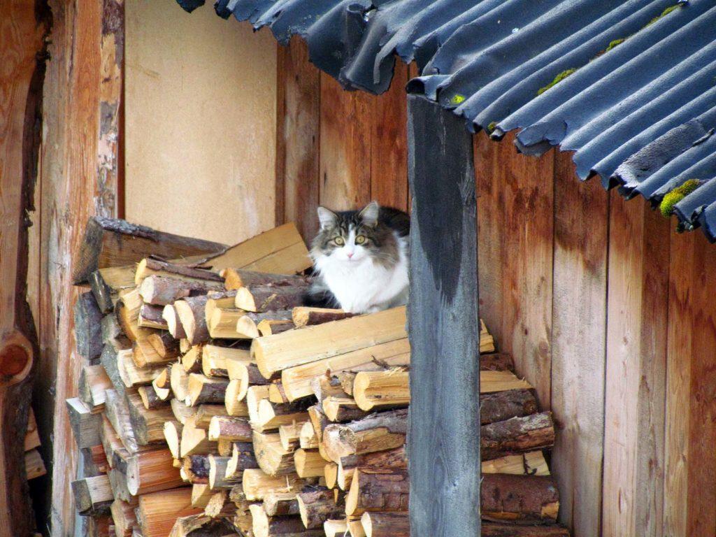 kot w Ischgl
