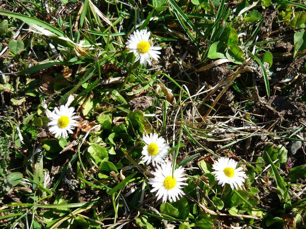 wiosna w Ischgl